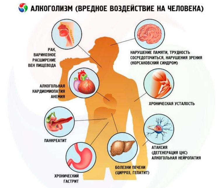 Водка разжижает кровь или сгущает — NET-ALKO