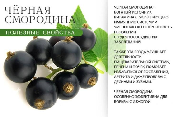 Листья смородины при анемии