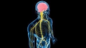 Витамины и микроэлементы для укрепления нервной системы и восстановления мозга — Superfb