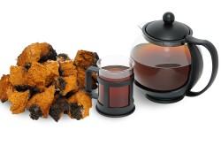 Гриб чайный полезные свойства для женщин