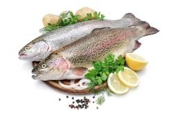 Cамая полезная рыба — 10 лучших сортов для здоровья человека