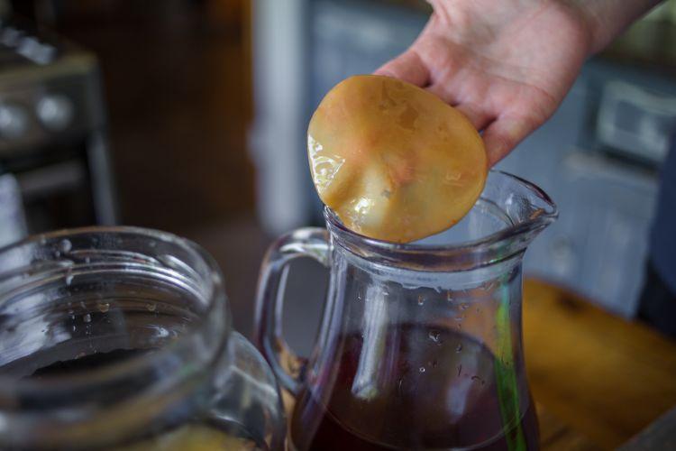 Квас на чайном грибе польза