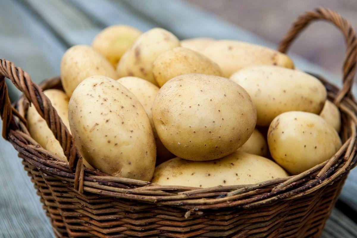 Картофель в бодибилдинге польза и вред блюдо с картофелем