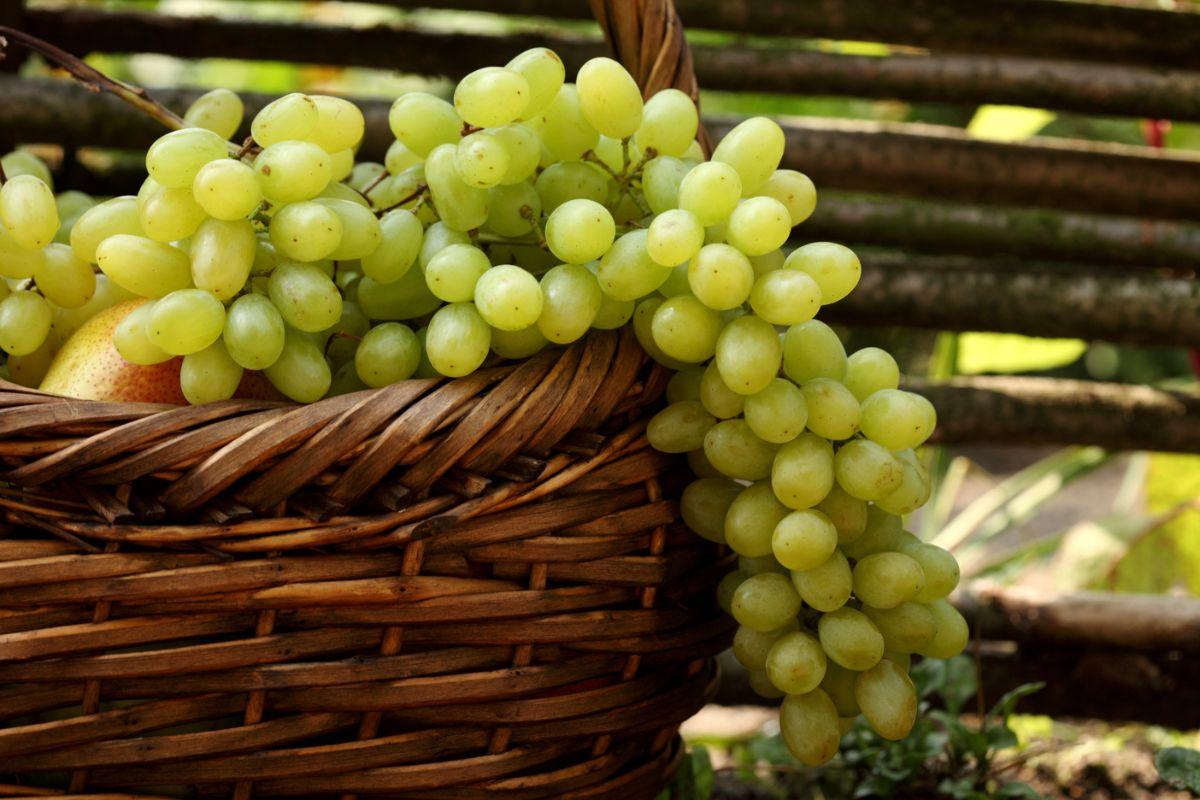 Полезность черного винограда