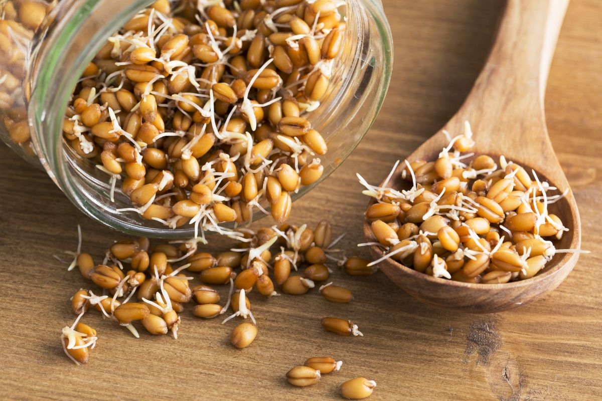 Проросшие семена пшеницы